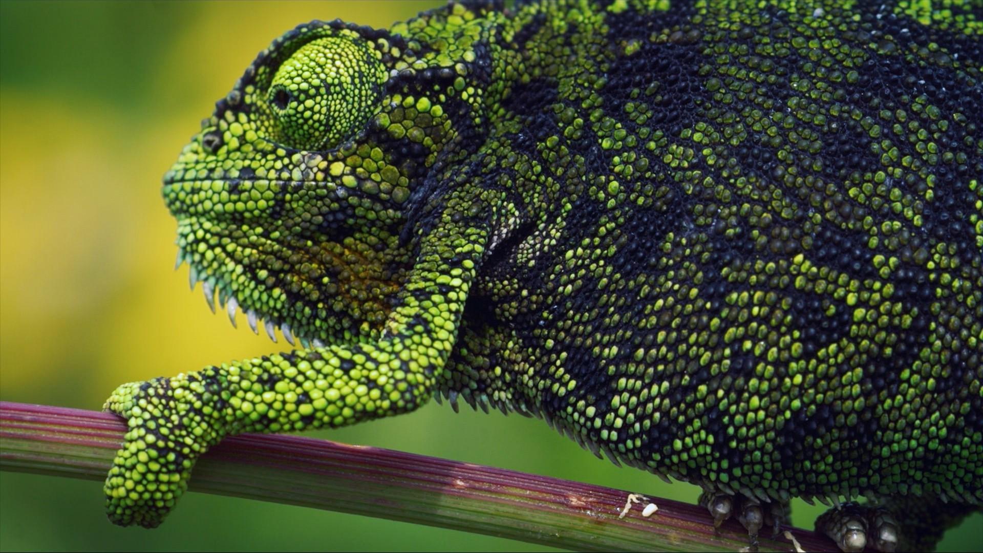 Spektakulární wild-life i vědecké fun facty